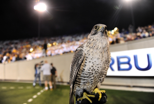 Sep 21, 2013; Colorado Springs, CO, USA; General view of a Gyrfalcon one of the mascots of the Air Force Falcons football team before the game against the Wyoming Cowboys at Falcon Stadium. Mandatory Credit: Ron Chenoy-USA TODAY Sports