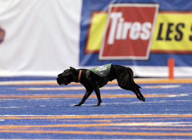 Sep 28, 2013; Boise, ID, USA; Z the tee dog takes the tee off the field after a Boise State Broncos kick off during the second half against the Southern Miss Golden Eagles at Bronco Stadium. Boise State defeated Southern Miss 60-7. Mandatory Credit: Brian Losness-USA TODAY Sports