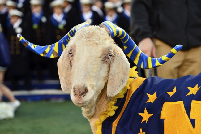 Nov 9, 2013; Annapolis, MD, USA; The Navy Midshipmen mascot is shown here on the sidelines during the second quarter of the Hawaii Warriors vs Navy Midshipmen game at Navy Marine Corps Memorial Stadium. Mandatory Credit: Tommy Gilligan-USA TODAY Sports