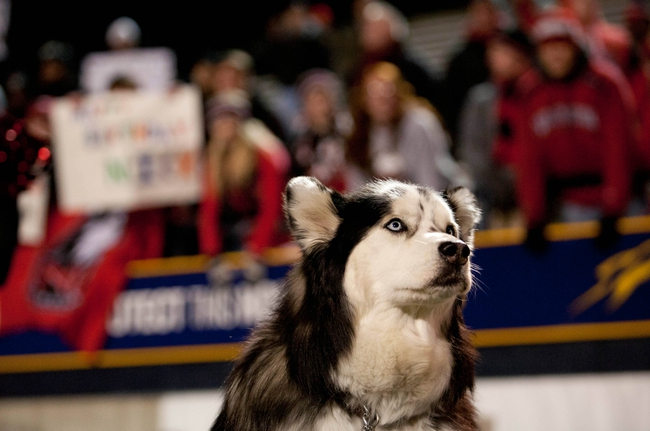 Nov 20, 2013; Toledo, OH, USA; Northern Illinois Huskies mascot during the fourth quarter against the Toledo Rockets at Glass Bowl. The Huskies beat the Rockets 35-17. Mandatory Credit: Raj Mehta-USA TODAY Sports