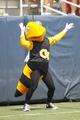 Aug 31, 2013; Atlanta, GA, USA; Georgia Tech Yellow Jackets mascot Buzz performs against the Elon Phoenix in the third quarter at Bobby Dodd Stadium. Georgia Tech defeated Elon 70-0. Mandatory Credit: Brett Davis-USA TODAY Sports