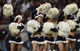 Dec 15, 2013; St. Louis, MO, USA; St. Louis Rams cheerleaders perform during the first half of a game against the New Orleans Saints at the Edward Jones Dome. The Rams defeated the Saints 27-16. Mandatory Credit: Jeff Curry-USA TODAY Sports
