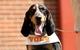Apr 12, 2014; Knoxville, TN, USA; Tennessee Volunteers mascot Smokey during the orange and white spring game at Neyland Stadium. Mandatory Credit: Randy Sartin-USA TODAY Sports